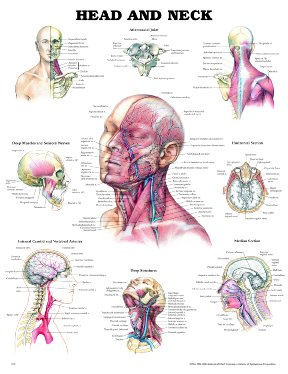 Dr yungs ent practice download diagram of the head and neck with labels of the parts ccuart Gallery